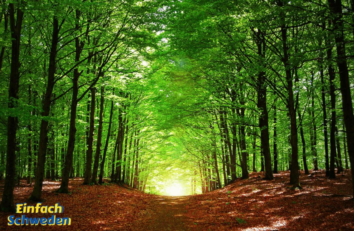 Värmland Landschaft Provinz Schweden Wald