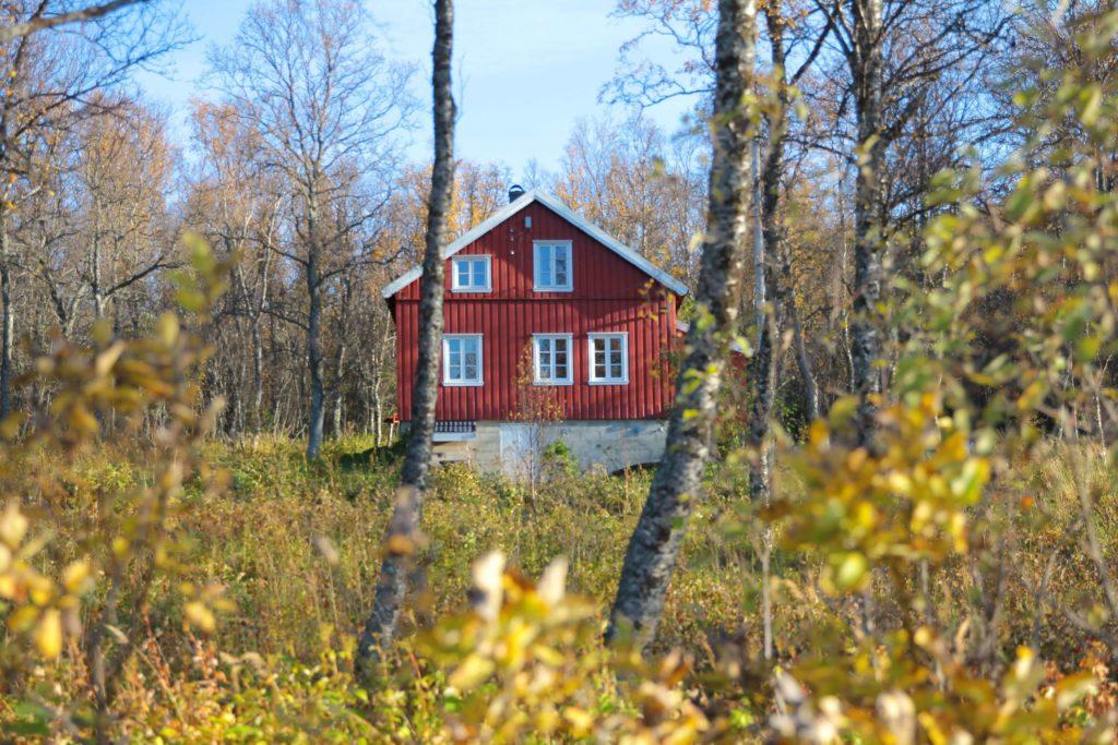 Schweden Schwedenhaus Wald Herbst Franzi in Schweden daniel-cristian