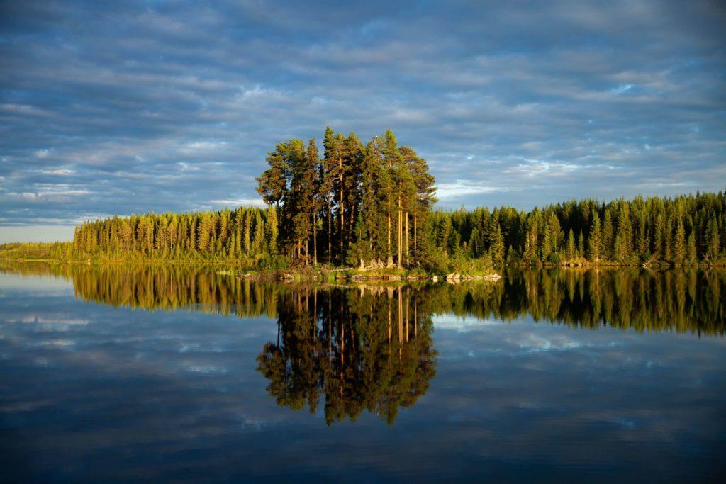 Wald - Lieblingsplatz Franzi in Schweden