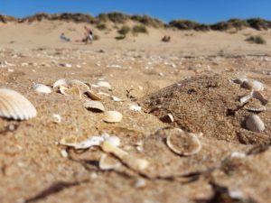 Strand Ängelholm Schweden Sand