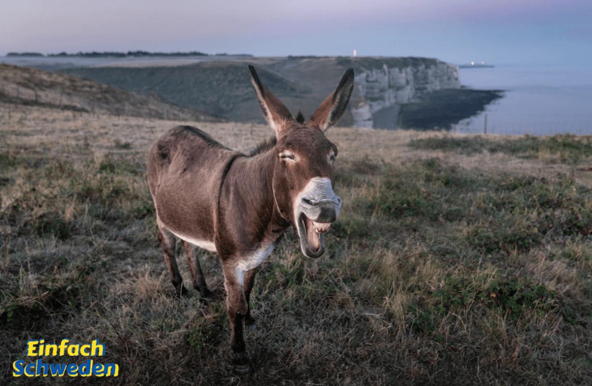 Tierisch schwedische Vokabeln Adjektive Esel