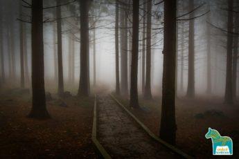 Schwedisch Schweden Spukgeschichten dunkler Wald Bäume