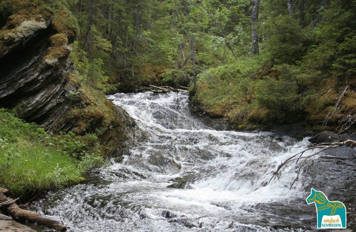 Jämtland Schweden Sweden Sverige Natur Fluss Wald